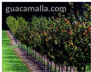 Arboles de frutos
